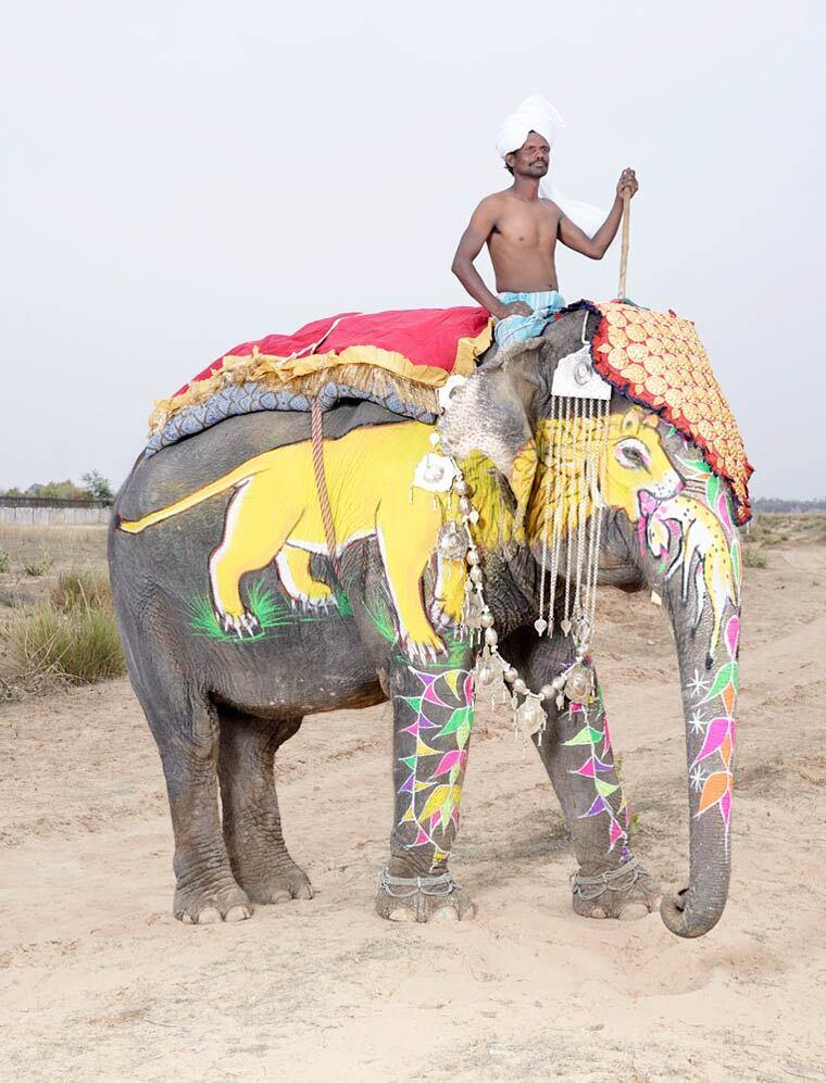 charles-freger-painted-elephants-7