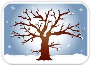 Topo  arbre en hiver