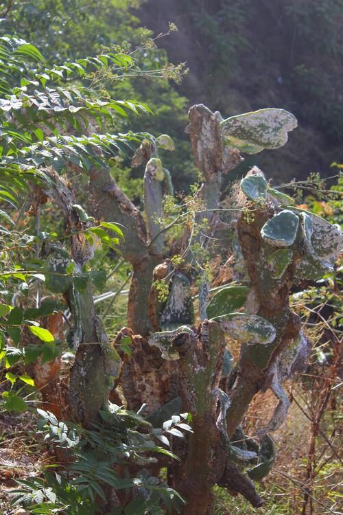 Cactus et plantes grasses 1