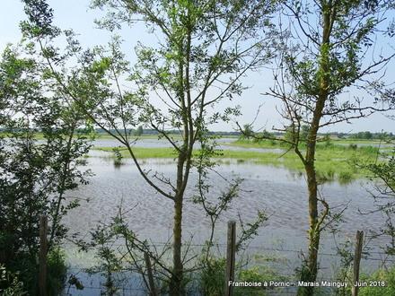 Le marais mainguy après le déluge