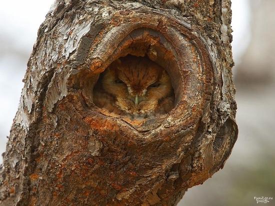 camouflage-de-hiboux24