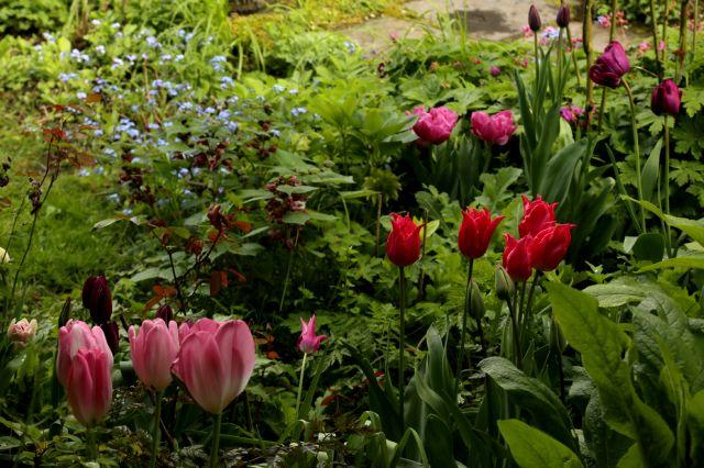 Tulipes 2016 : erreur de casting
