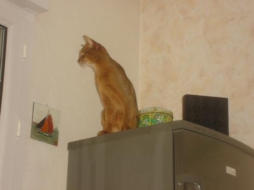 Naaan ...... j'peux pas aller plus haut !!!!!!!!