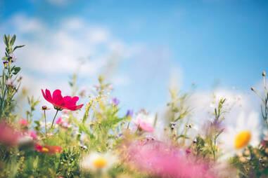 Fleurs Banque d'images et photos libres de droit