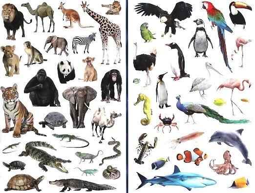 Super Mon guide des animaux sauvages (Avec 50 stickers d'animaux) - Les  KH69