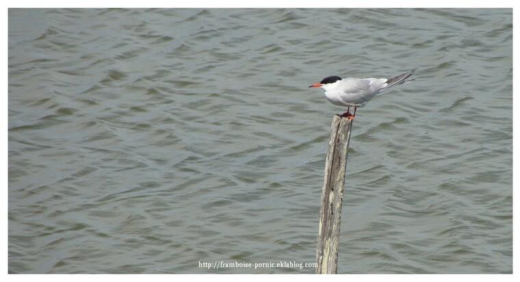Sortie ornithologique avec Michel Hubaut