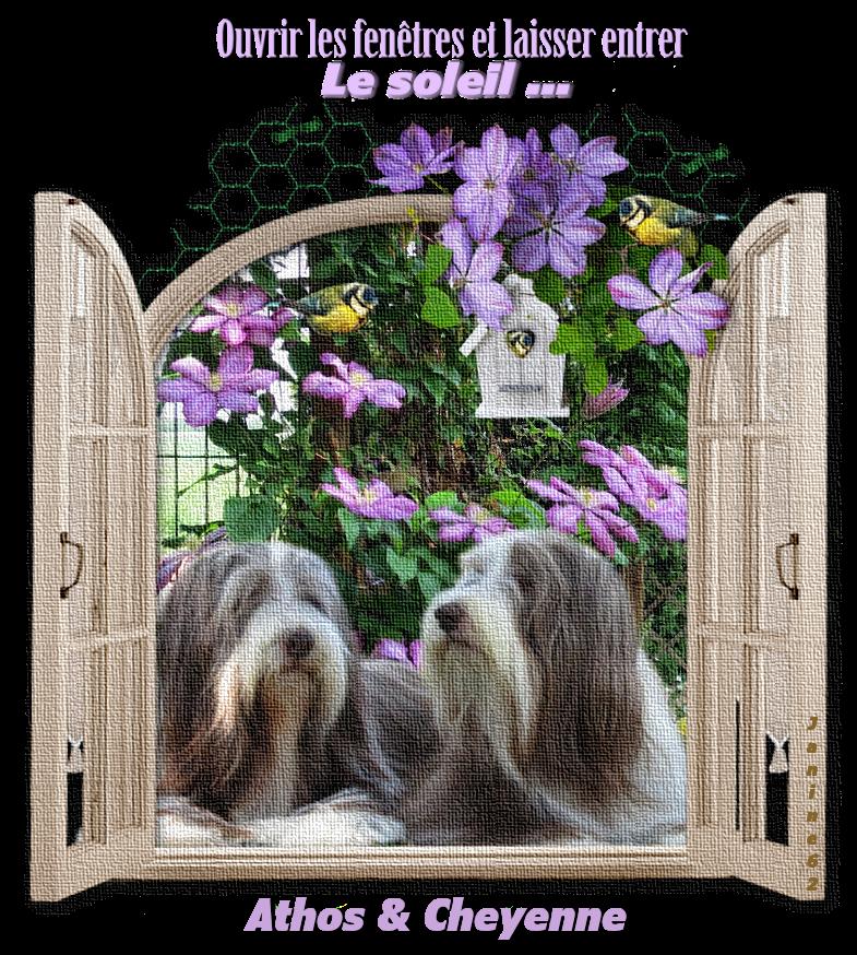 2020 Jardin d' Athos & Cheyenne ♥ photos avril & mai