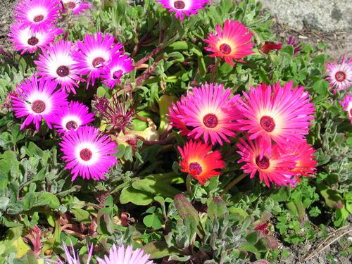 Poésie au coeur des fleurs (3)