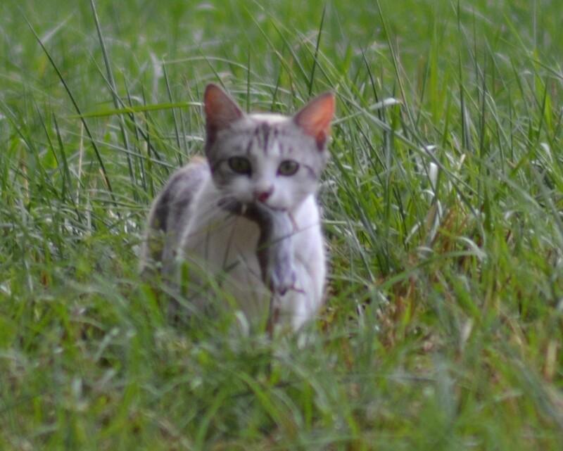 Petit chat deviendra grand !
