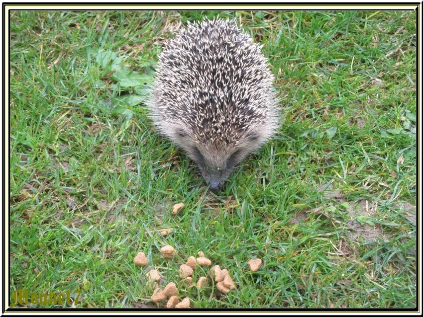Etonnante visite dans le jardin
