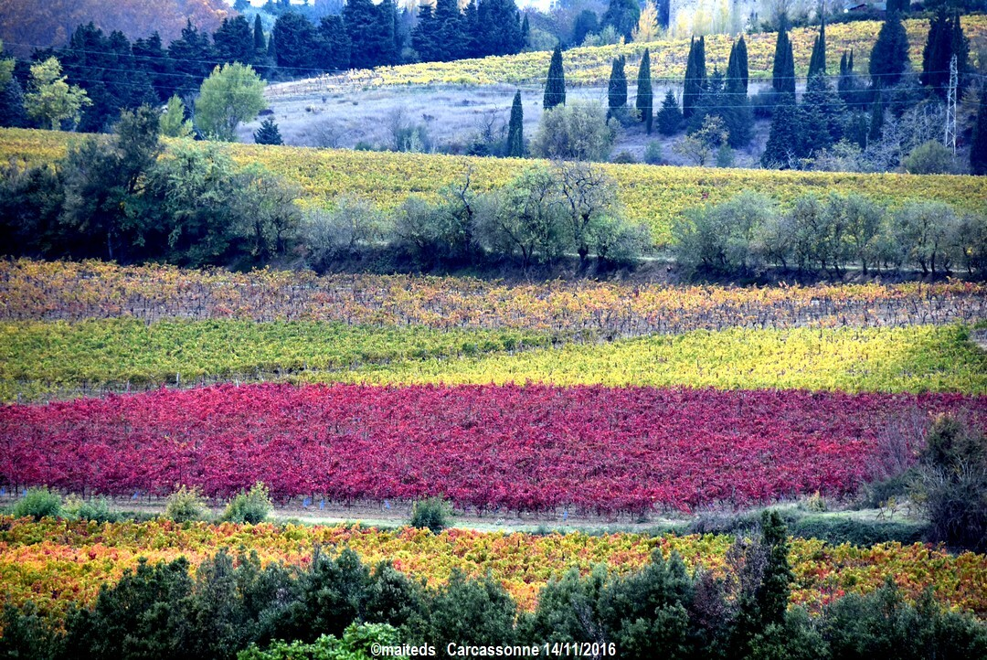 vignes audoises à  Carcassonne