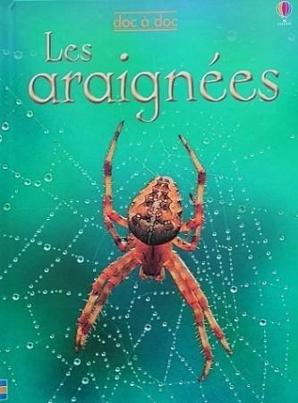 Les-araignees-1.JPG