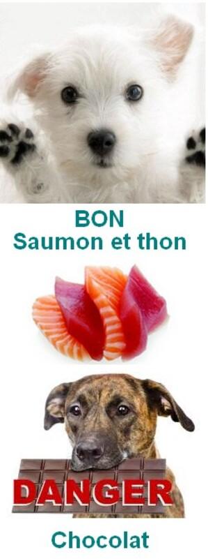 Aliments sains et ceux à bannir pour votre chien