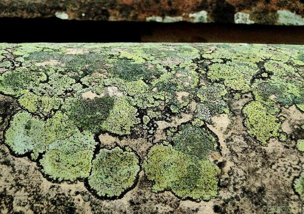 Coloré par les lichens