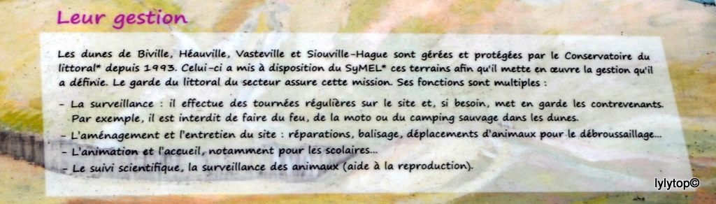 Siouville (fin)