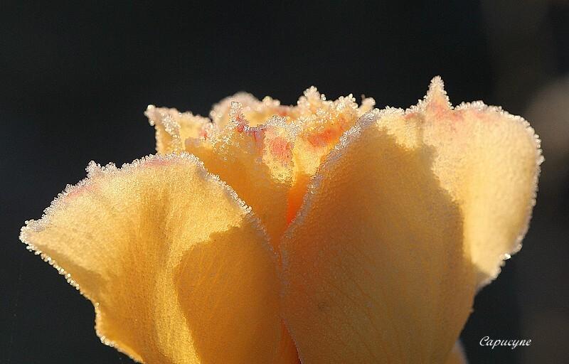 roses 9588
