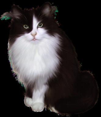 Tubes 3D - thème les chats