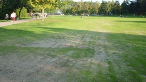 1 mois après : la pelouse pousse (25 septembre 2011)