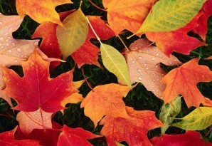 Hidden stars - Colorful leaves