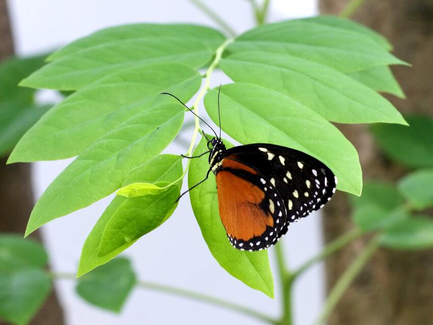 11 Images de Papillons