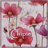 Chipie50