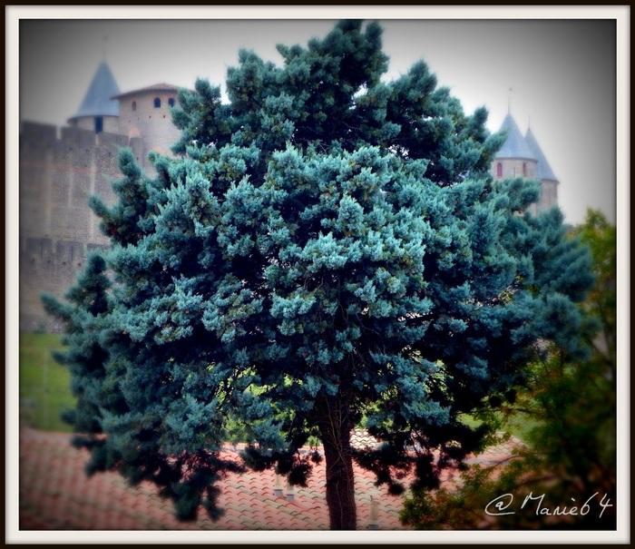 Auprès de mon arbre ..............