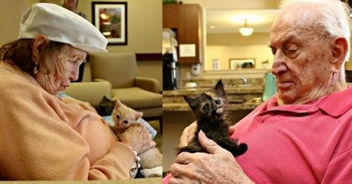 Des chatons orphelins dans une maison de retraite
