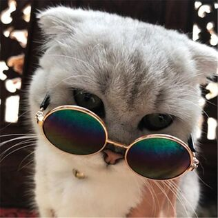 Cool Cat Sunglasses For Your Cat – Cats Love Life