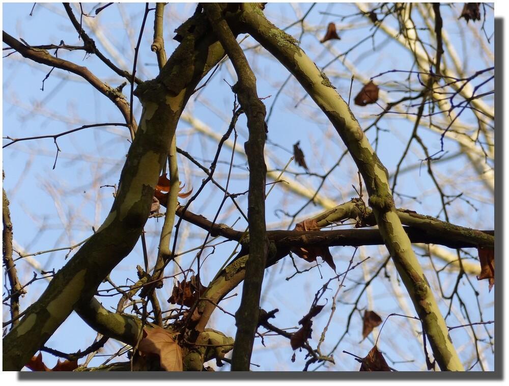 C'est bien connu, on ne prête qu'aux riches...avec tous ces A, gageons que le printemps prêtera à cet arbre un maximum de feuilles...