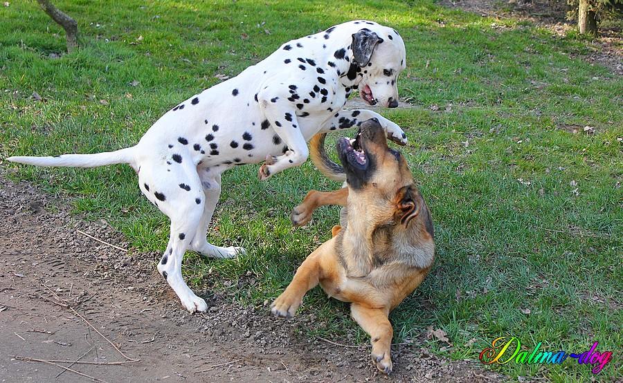 jeu de chien
