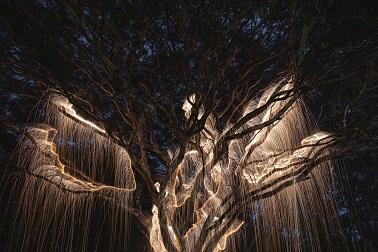 Des arbres comme illuminés de l'intérieur ...