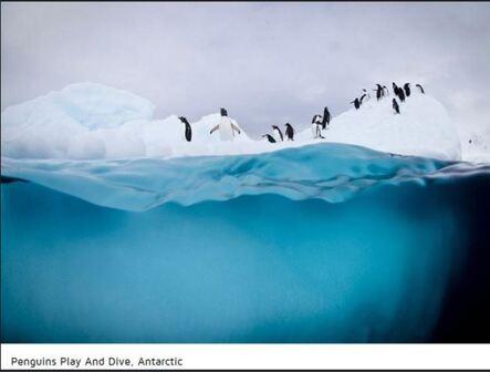 Antartique