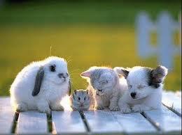 Idée pour aider les refuges pour animaux