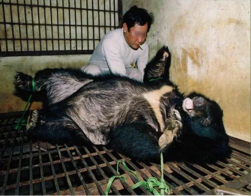 Les ours en Chine