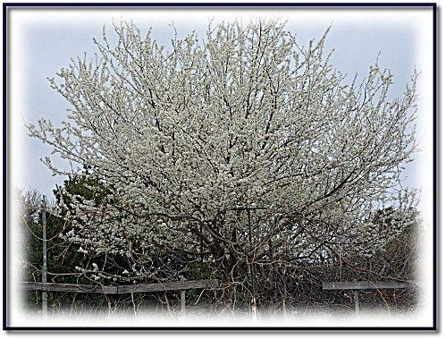 printemps-jardin-2012-1.jpeg