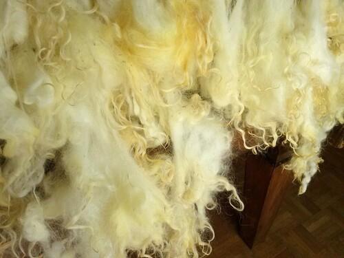Présentation : La Laine de Mouton : La Toison Brute .