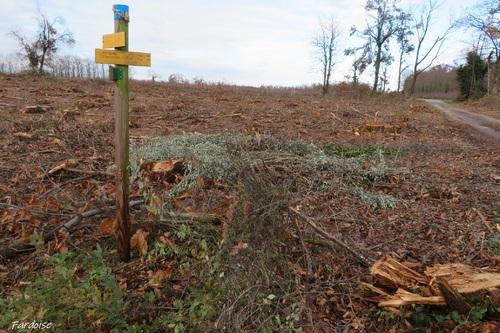 Les arbres abattus de Mercurol - suite