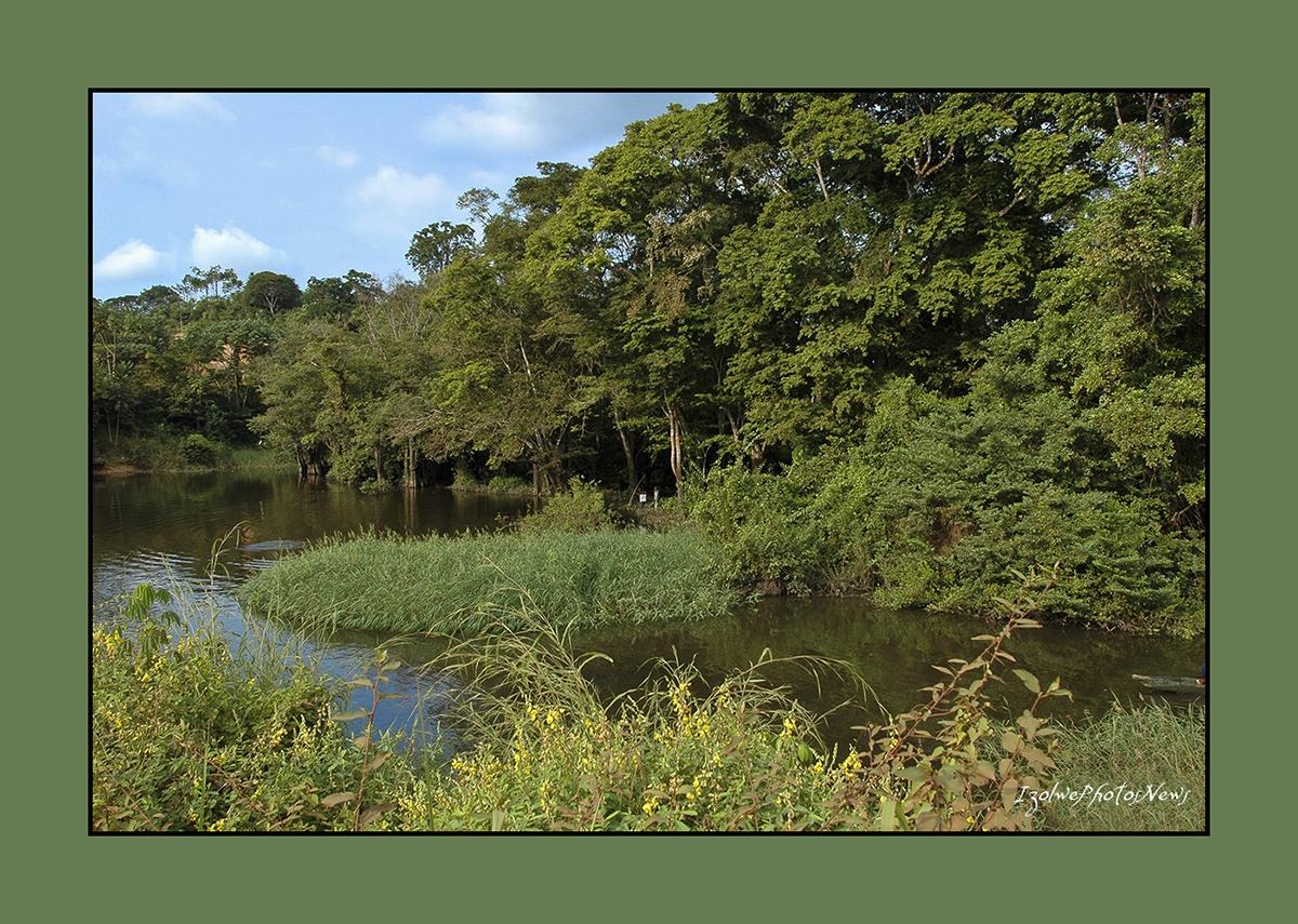 De forêt et d'eau