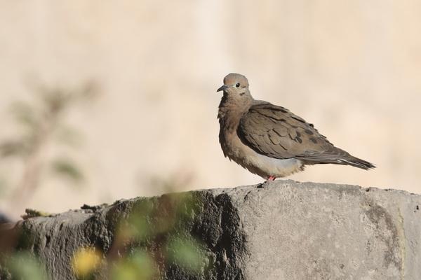 7 août 2015 : Arequipa