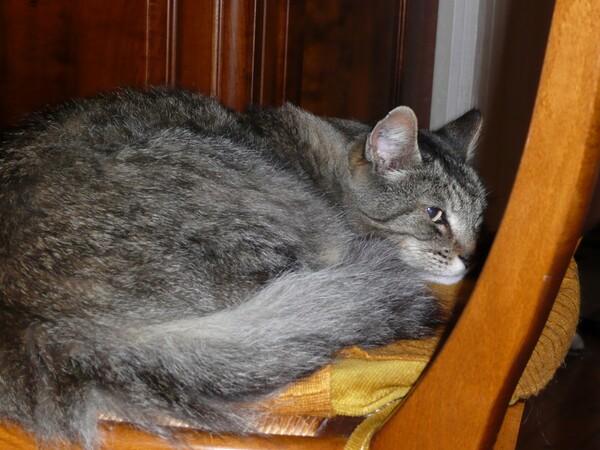 Visite de contrôle chez le vétérinaire et des clics pour Bakoo