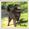 Rocky bb 7