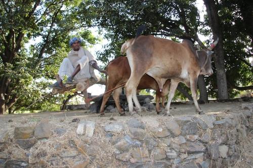 Vie quotidienne au Rajasthan