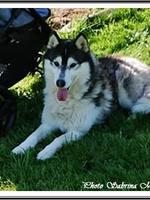 Laska (3 ans)