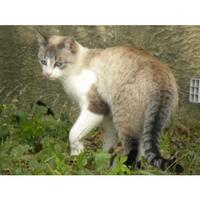Chats trouvés dans l'Hérault