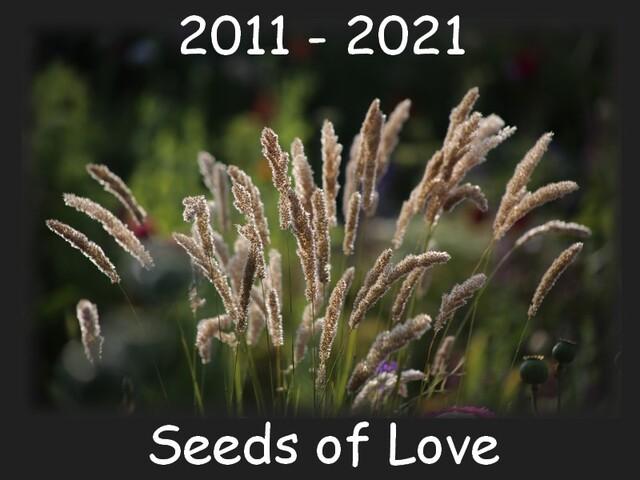 Seeds of Love 2021 - J-5 : quelques consignes importantes