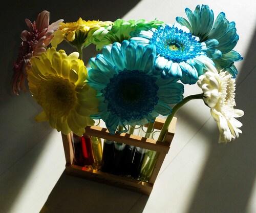 Des fleurs colorées aux couleurs primaires et secondaires...