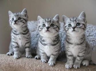 LES CHATS..    Leurs curiosités..!!