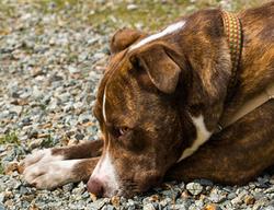 Dog Training Benefits