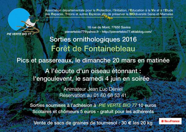 • À la découverte des pics de la forêt de Fontainebleau