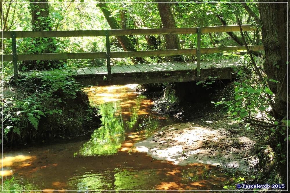 Les étangs de Monsalut - Début Août 2015 - 2/7